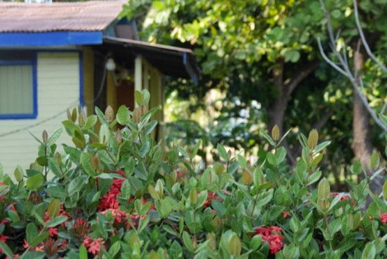 Colourful cottage and garden on Tamarindo main street