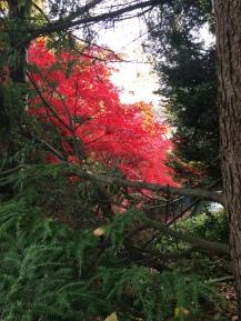 Late fall colours