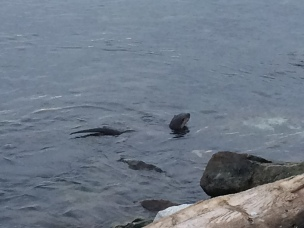 A family of river otters